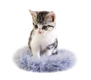Adorable little kitten on white background Royalty Free Stock Photo
