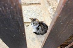 Little kitty royalty free stock photo