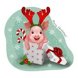 Adorable little pig in gift box. Vector royalty free stock images