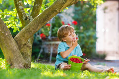 Adorable little preschool boy eating raspberries in home's garde Stock Photography