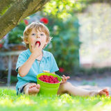 Adorable little preschool boy eating raspberries in home's garde Stock Image