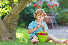 Adorable little preschool child eating raspberries in home's gar Stock Image