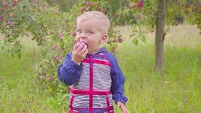 Adorable little preschool kid boy eating red apple on organic farm. Healthy food. Harvest