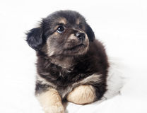 Adorable little puppy dog Stock Image
