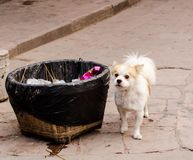Adorable little puppy near a garbage can.  royalty free stock photography