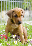 Adorable little puppy sitting between summer flowers Stock Photo
