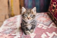adorable little tabby kitten looking stock photos