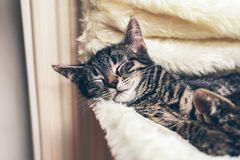 Adorable little tabby kitten lying fast asleep Stock Photos