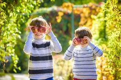 Family fun during harvest time on a farm. Kids playing in autumn garden. Adorable little two baby boys picking fresh ripe apples in fruit orchard. Family fun stock photos