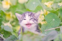 Adorable meowing kitten outdoors Royalty Free Stock Photos