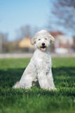 Adorable mixed breed dog posing outdoors Royalty Free Stock Photography