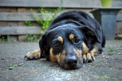 Adorable mixed breed dog resting on the ground stock image