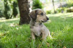 Adorable mixed breed puppy Stock Photo