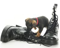 Boot Sniffer Royalty Free Stock Photos