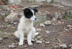 Adorable mixed breed puppy Royalty Free Stock Photos