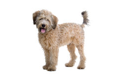 Adorable mongrel dog Royalty Free Stock Images