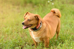 Adorable mongrel dog in the park Stock Photos
