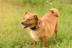 Adorable mongrel dog in the park Stock Photos