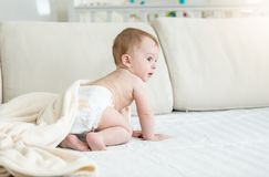 Adorable 10 months old baby boy in diapers sitting on sofa. 10 months old baby boy in diapers sitting on sofa royalty free stock photo