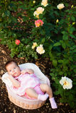 Adorable neewborn girl at roses garden Stock Photo