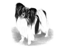 Adorable Papillon Dog Drawing Stock Photos