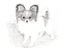 Adorable Papillon Puppy Hand Drawn Art Royalty Free Stock Photo