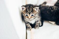 Adorable pensive tiny tabby kitten Stock Image