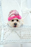Adorable in Pink Stock Photos
