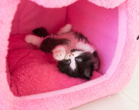Adorable playful kitten in cat house Royalty Free Stock Images