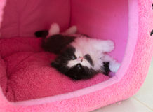 Adorable playful kitten in cat house Stock Photos