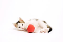 Adorable Playful Kitten Stock Images