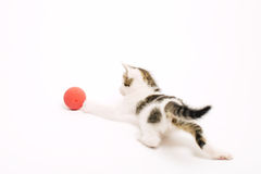 Adorable Playful Kitten Royalty Free Stock Photos