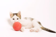 Adorable Playful Kitten Stock Photos