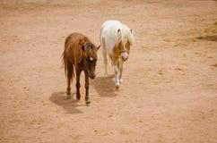 Adorable pony portrait in farm Stock Images