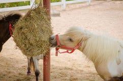 Adorable pony portrait in farm Stock Photography