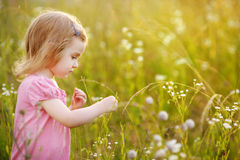 Adorable preschooler girl in a meadow Royalty Free Stock Photos