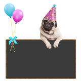 Adorable pug puppy dog hanging with paws on blank sign with balloons and wearing pink party hat, on white background Stock Image