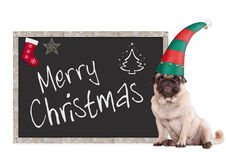 Adorable pug puppy dog wearing an elf hat, sitting next to blackboard sign with text merry christmas, on white background Stock Images