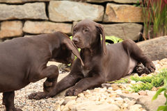 Adorable puppies in the garden Stock Image
