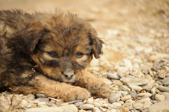 Adorable puppy Royalty Free Stock Photo
