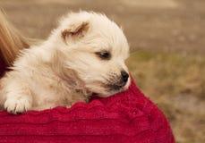 Adorable puppy Stock Photos