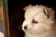 Adorable puppy Stock Photography