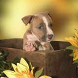 Adorable puppy. Nice puppy in a box royalty free stock photos