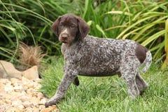 Adorable puppy in beautiful garden Royalty Free Stock Photos