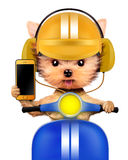 Adorable puppy with cellphone sitting on motorbike Royalty Free Stock Photography