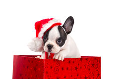 Adorable puppy in Christmas present box Stock Photo