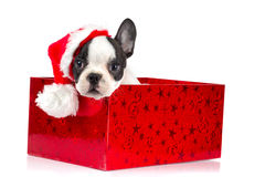 Adorable puppy in Christmas present box Royalty Free Stock Images