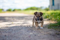 Small cute puppy looking in the camera Royalty Free Stock Photography