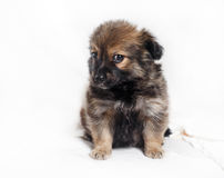 Adorable puppy dog Royalty Free Stock Photography
