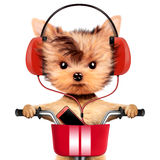 Adorable puppy with headphones sitting on bike Royalty Free Stock Photo